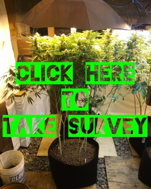SurveyPicFinal