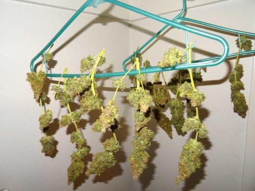 critical-jack-drying